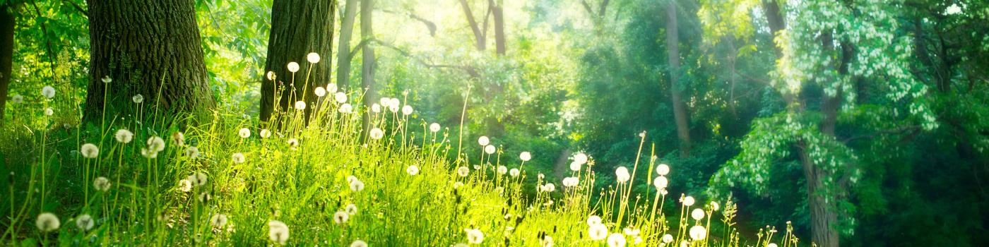 Sunlight on a grass and flower meadow