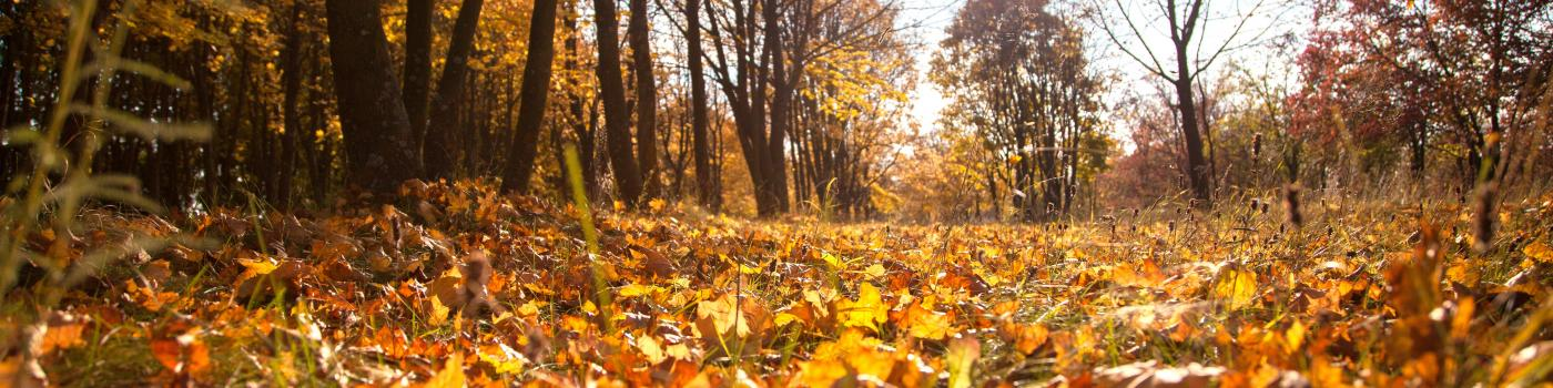 Autumn forest floor covered in leaves