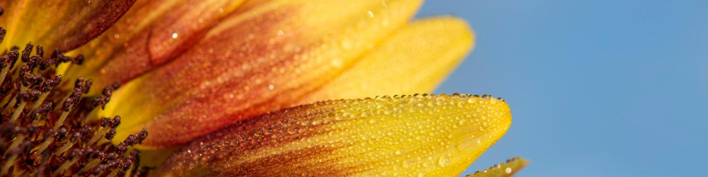 Close-up macro photo of a yellow flower