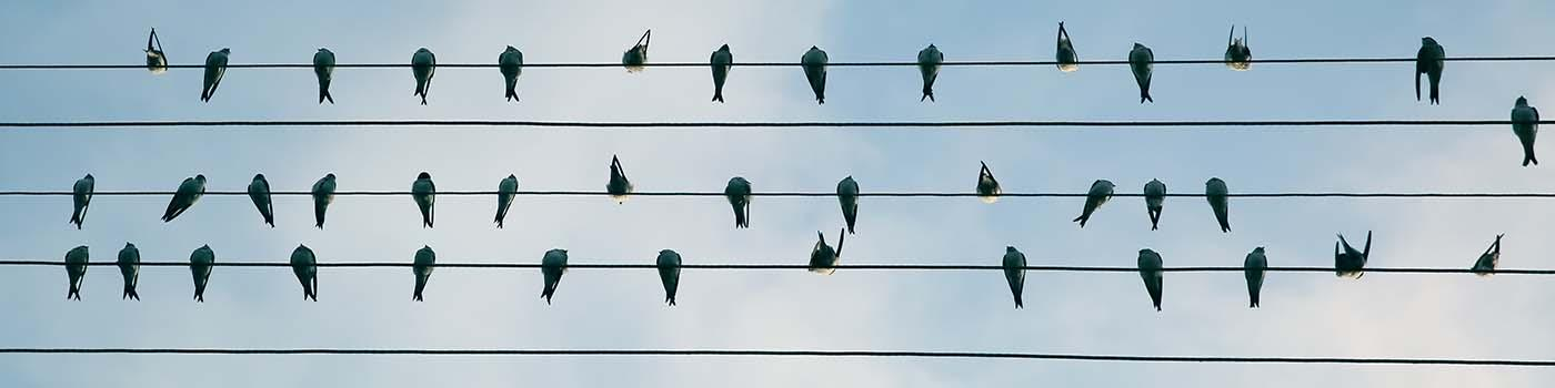 a dozen birds sitting on several telephone wires in the blue sky