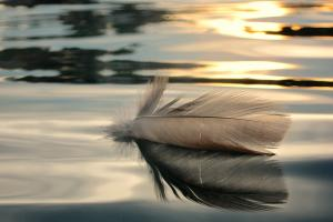 feather floating on still water