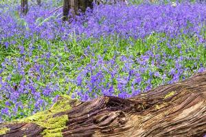 purple wild flowers in the forest with fallen tree